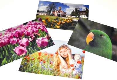 pictures of flowers and birds