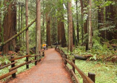 beautiful level walk way