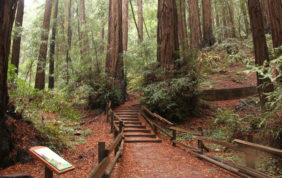 Stairs to upper trail