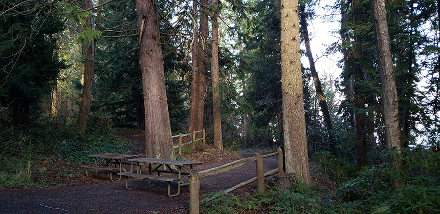 The Olympic Discovery Trail goes through this camp-ground