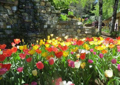 Tulip event called Anada