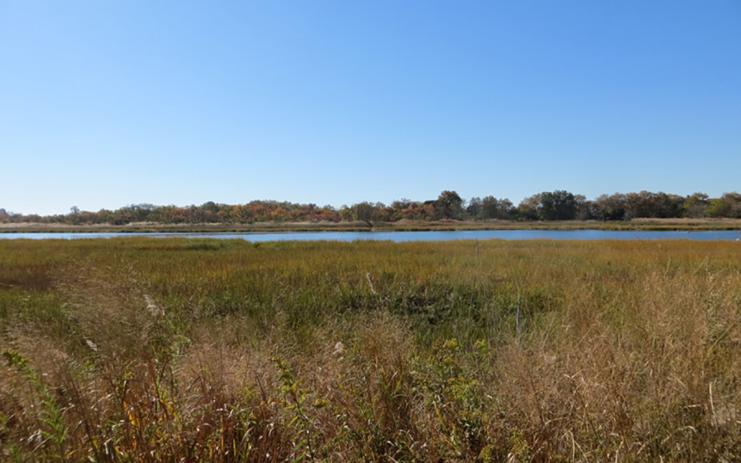 Escape to the Salt Marsh in Brooklyn New York