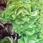 Lettuce Roses Watercolor painting