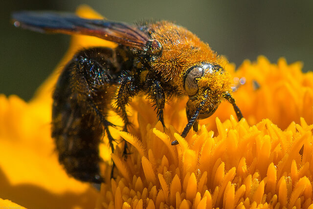 Teams can attract talent like flowers attract bees: effortlessly