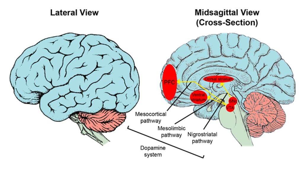 Neuroscience of psychometrics