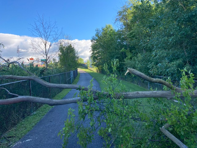 Getting my activity minutes but a tree down across the bike path