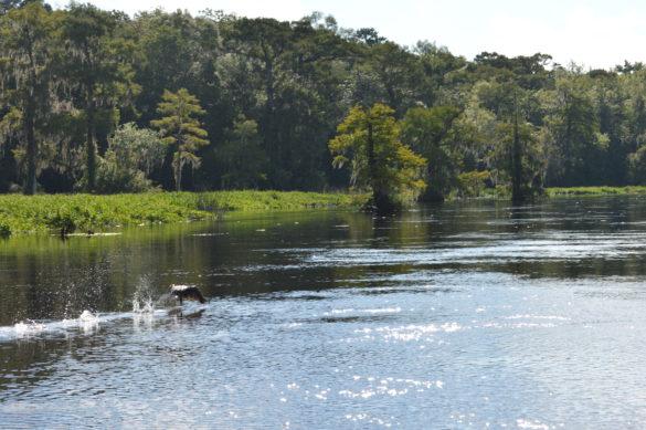 Wakulla Springs State Park- Florida