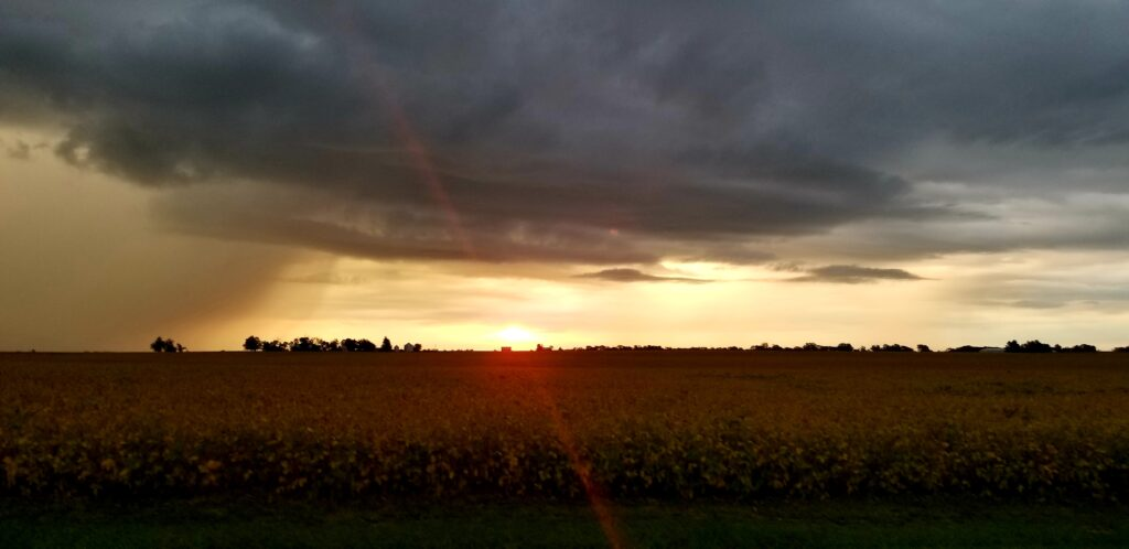 Sunrise with incoming storm, over a cornfield