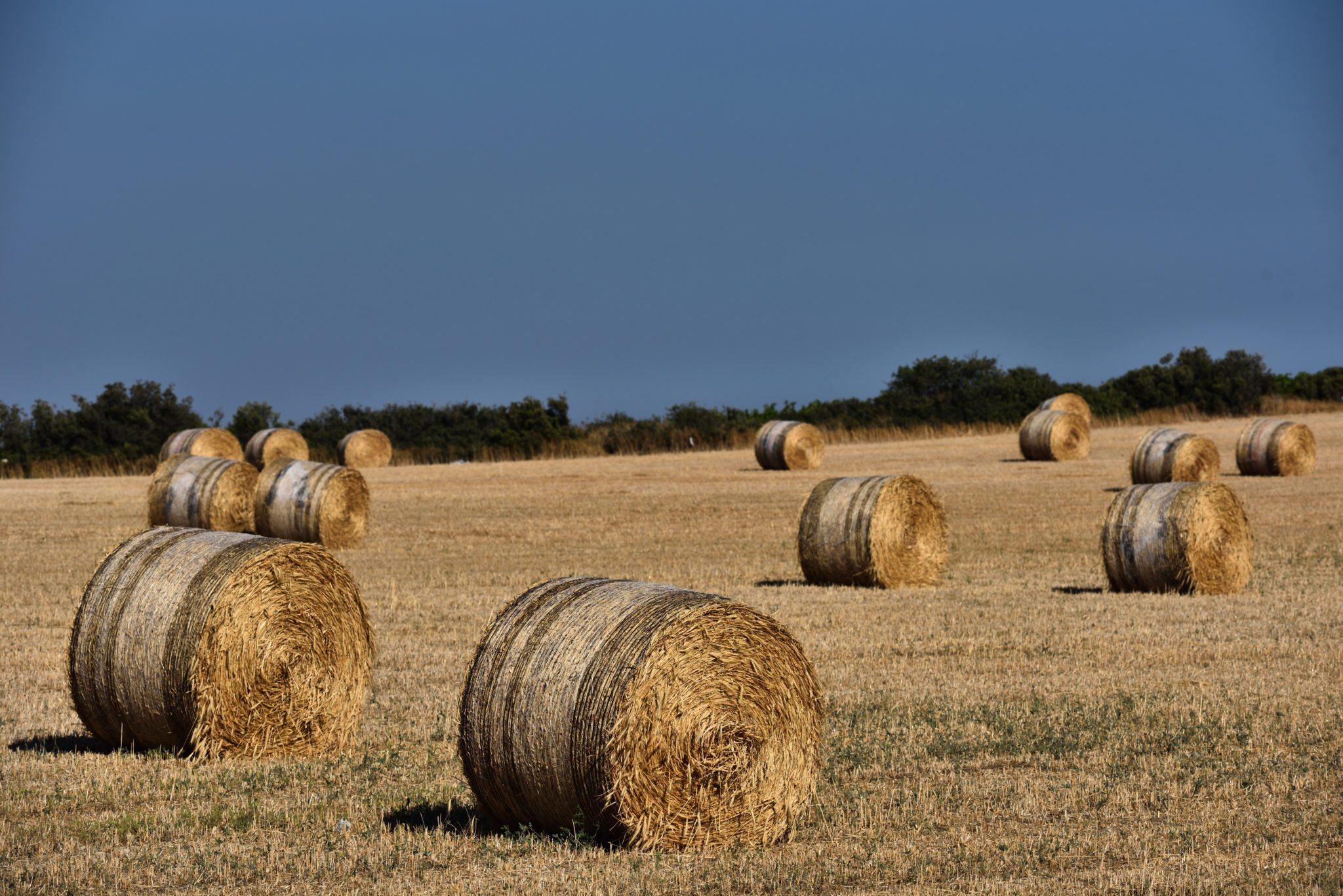 Straw bales, haystack on agricultural farmland against blue sky