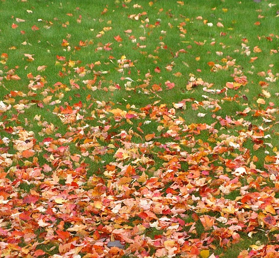 Lawn Masters of Kentucky | Leaf Removal