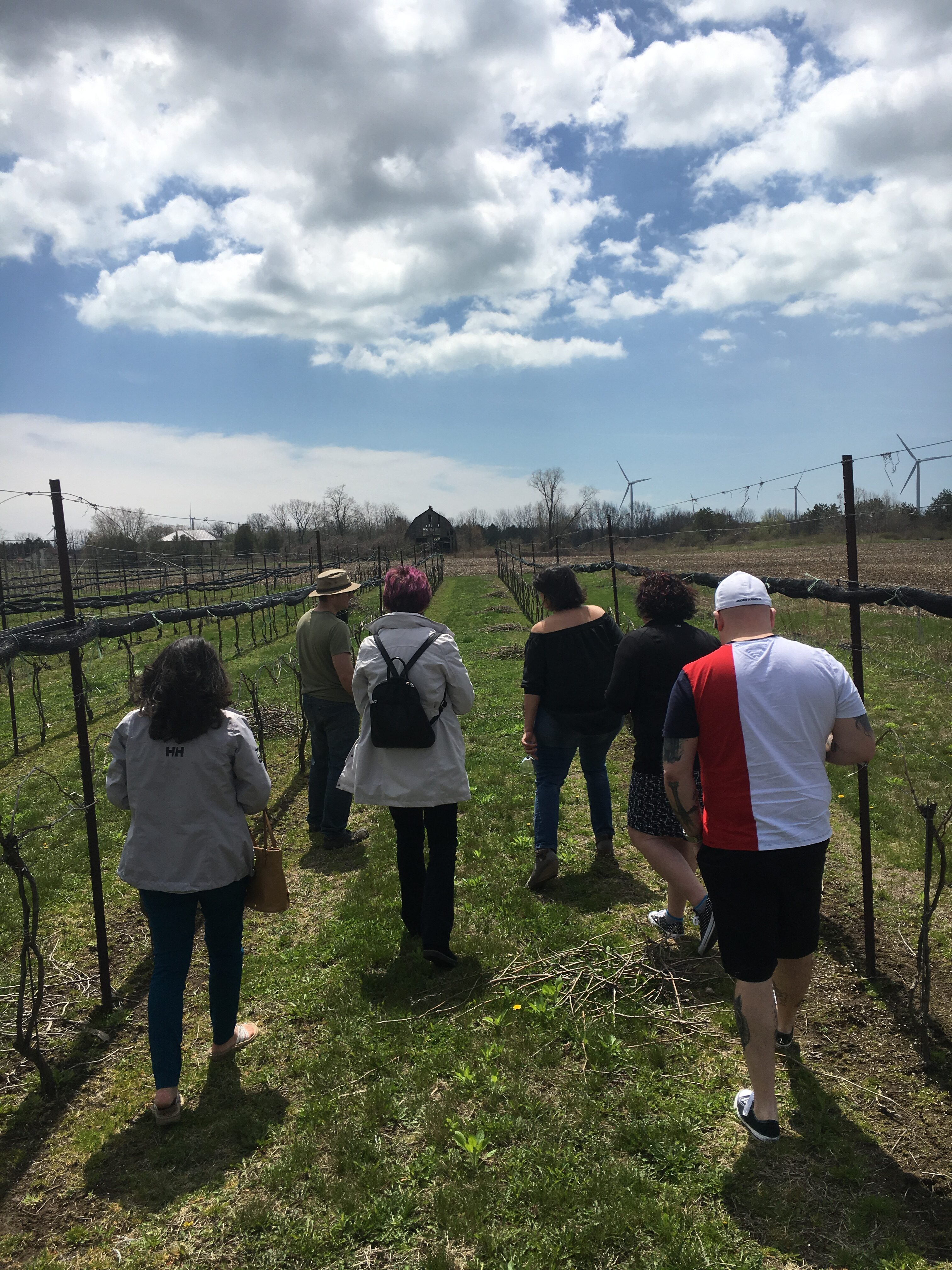 Group tour of vineyard and the vines