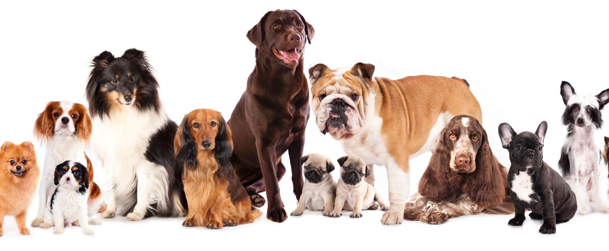 Furry Land Grooming - Las Vegas Dog Grooming