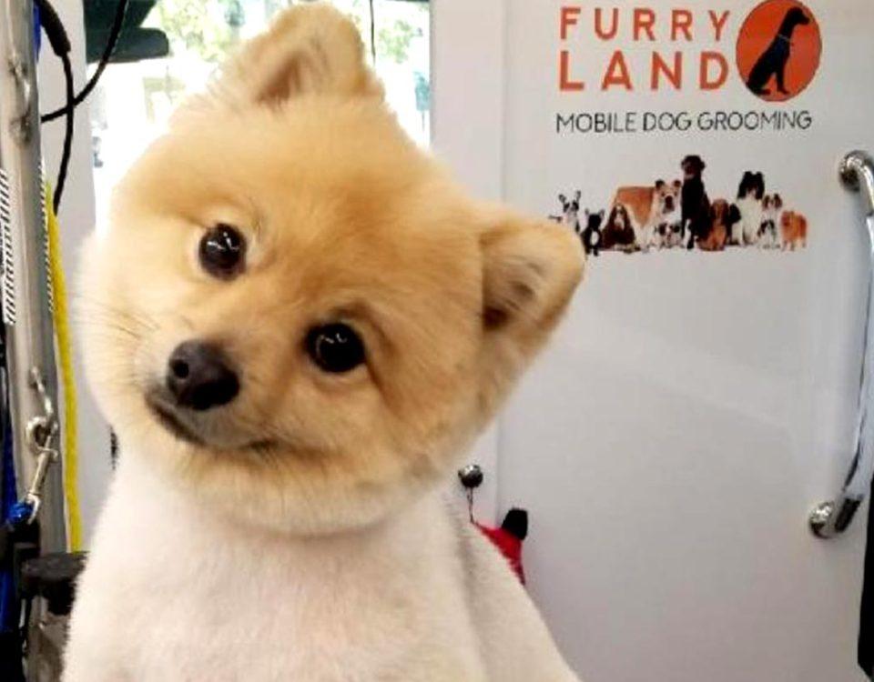Furry Land Pomeranian - Dog Grooming