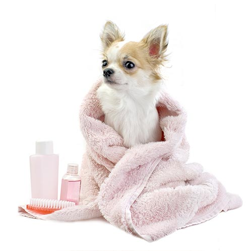 pink-dog-in-towel