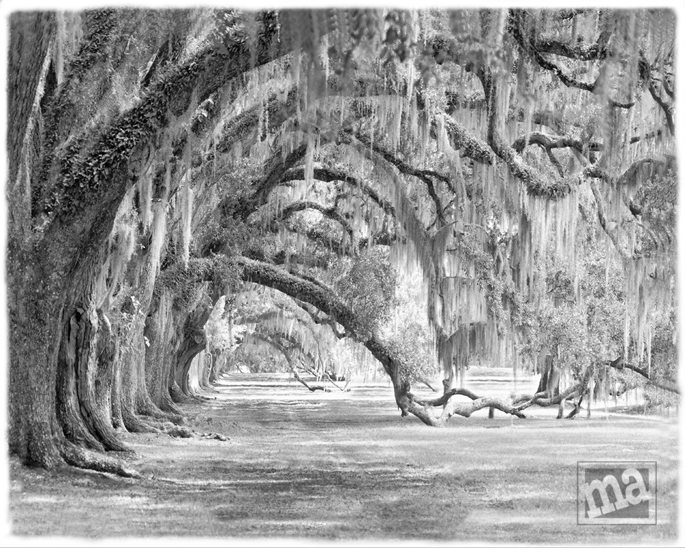 Southern Pathways by Marge Agin