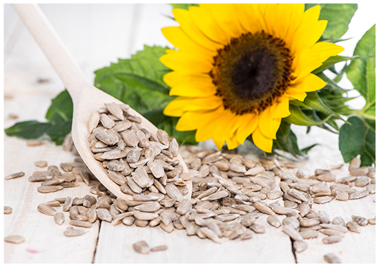 Sunflower seeds and a sunflower