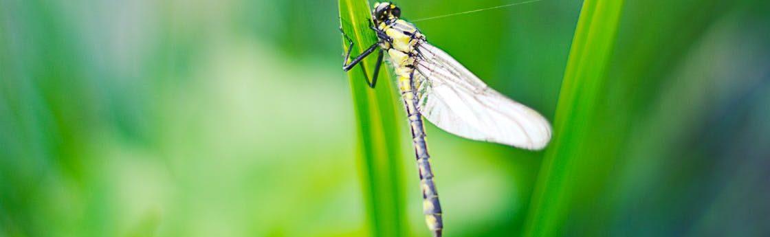 https://secureservercdn.net/198.71.233.184/a7f.814.myftpupload.com/wp-content/uploads/2017/07/cropped-silver-dragonfly.jpg
