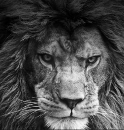 Are You A Lion Or A Sheep