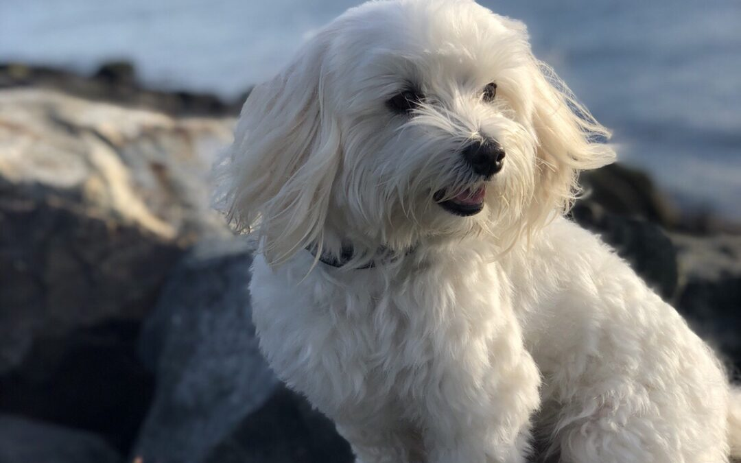 Meet Caruzo, our Chief Happiness Officer!