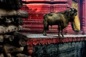 Untitled • ©Debasish Ghosh