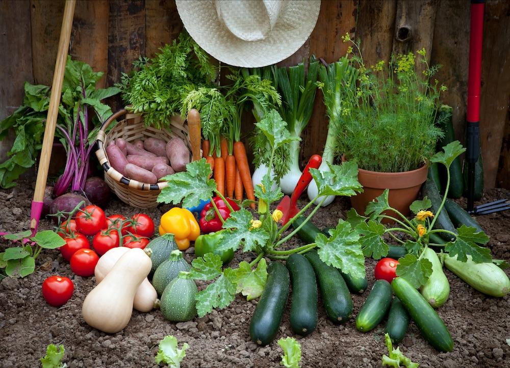 Food Bank Produce