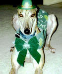 2001_GreyhoundPA01