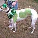 2001_GreyhoundPA03