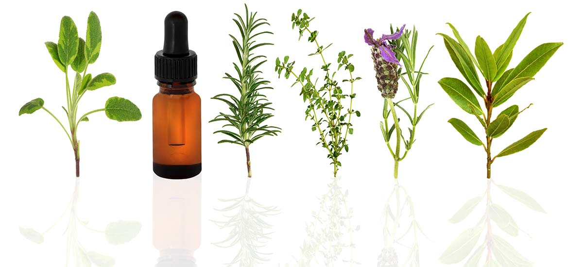 herbs-Depositphotos_2032997_xl-2015