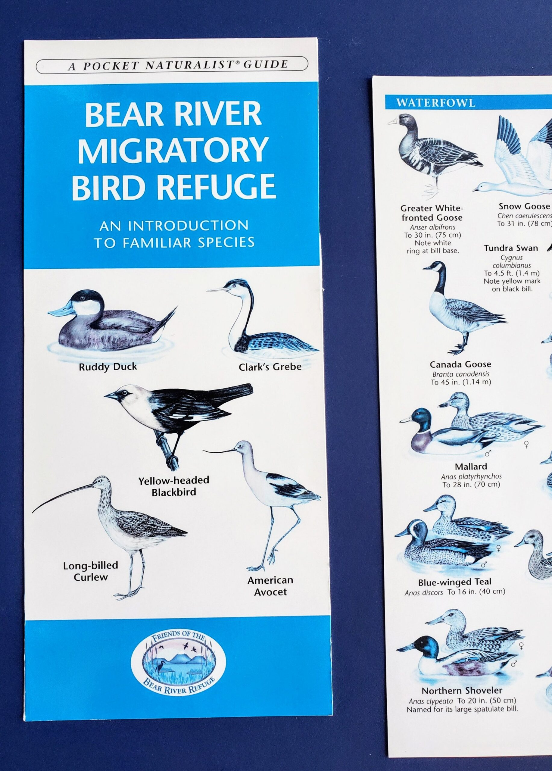 Birding Brochure from Bear River Migratory Bird Refuge