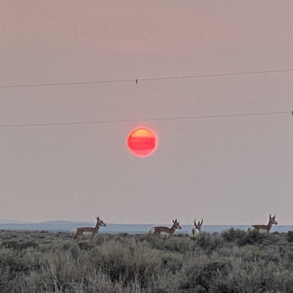 Antelope at Sunset Wyoming