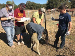 photo of Napa CART volunteers at livestock shelter