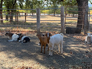 photo of animals at livestock shelter