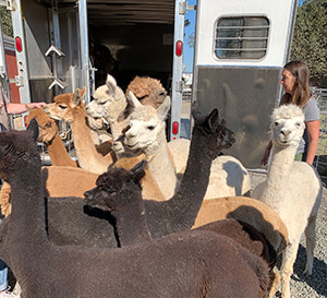 photo of Napa CART volunteers at livestock shelter