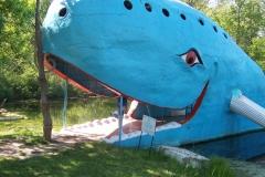Blue Whale in OK