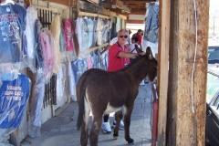 Chuck with donkey in Oatman