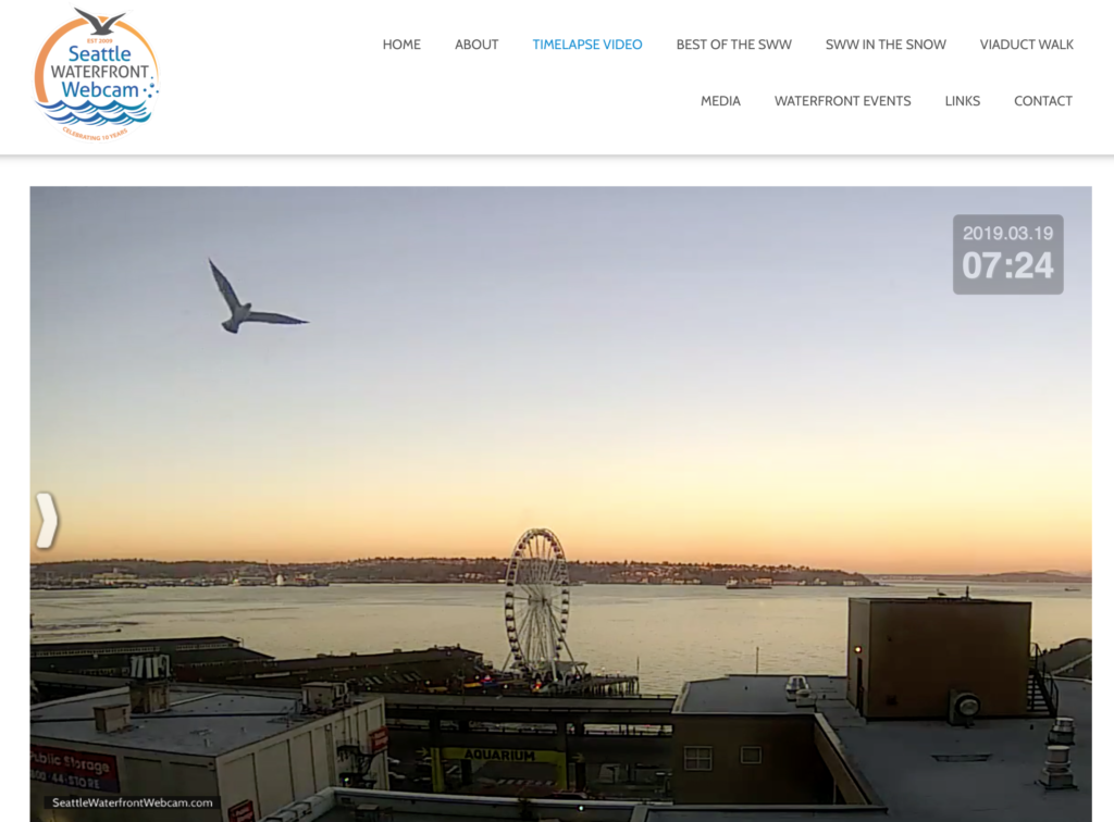 Seattle Waterfront Webcam Soaring Seagull at Sunset