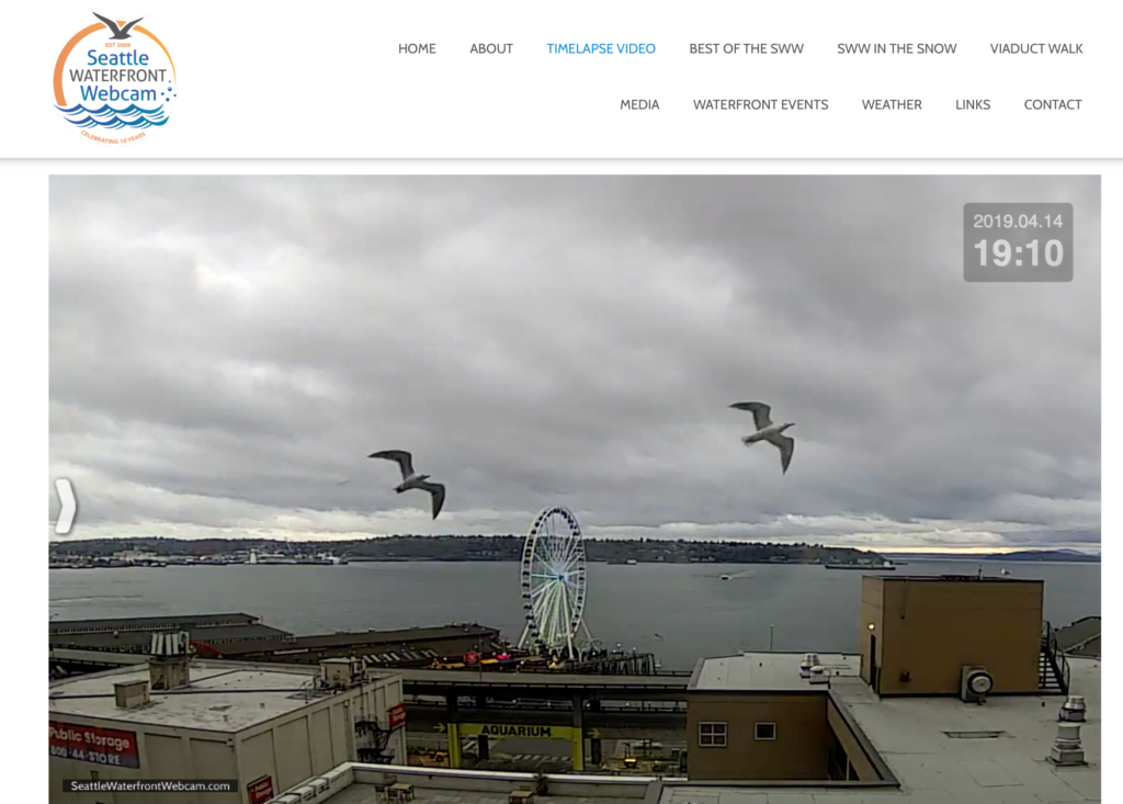 Seattle Waterfront Webcam Twin Seagulls Against Gray Skies