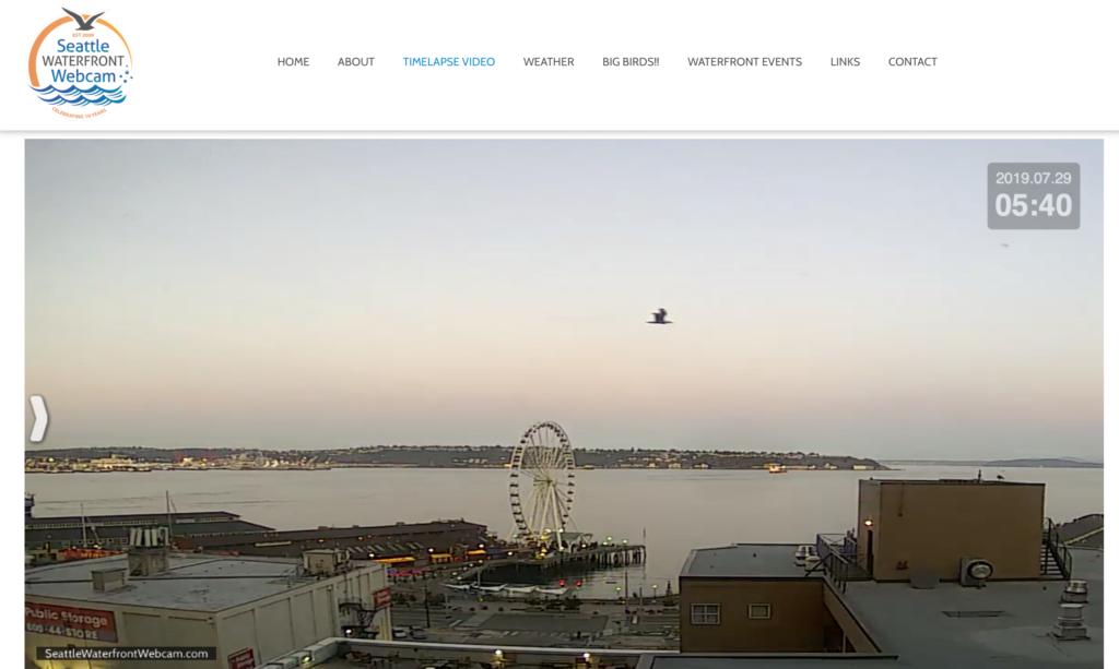 Seattle Waterfront Webcam Bird in Flight Before Dawn 07 2019