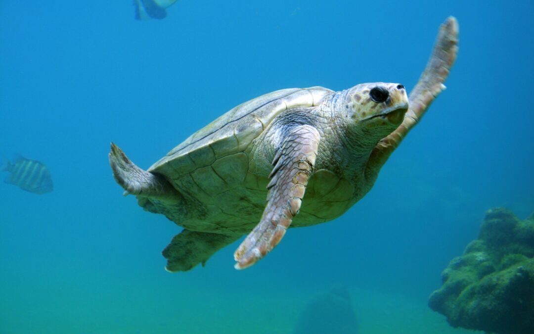 Sea turtle diving