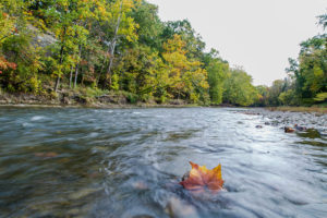 Rocky River Fly Fishing