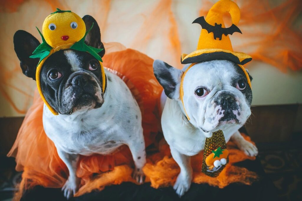 photo of dogs dressed up for Halloween