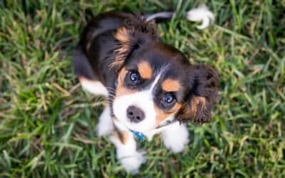 Living in a Pet-Friendly Apartment with a Puppy
