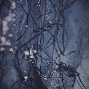 Limited edition print_Early Mourning_Karen Olson Photography