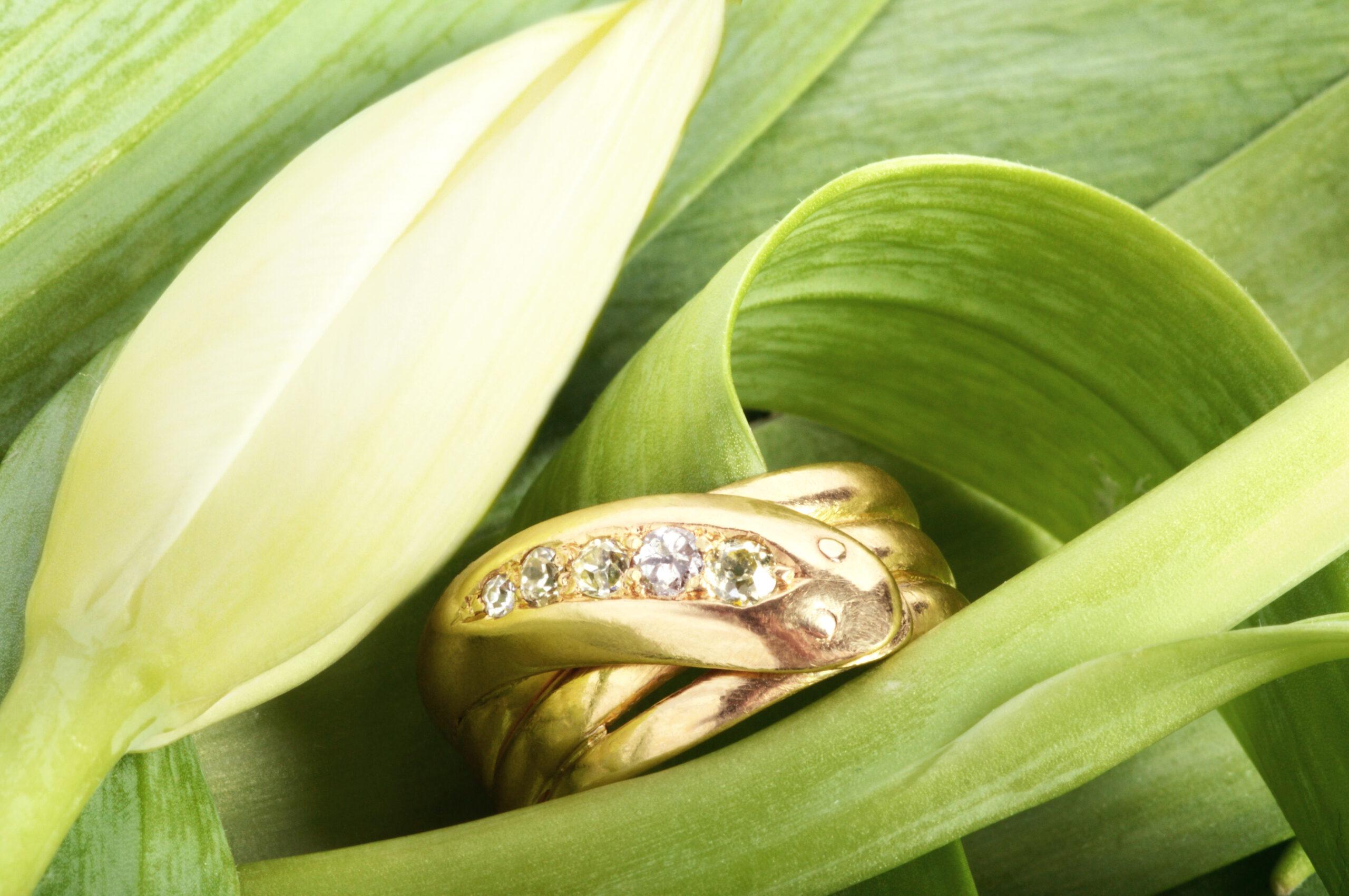 serpent rings in tulip petals
