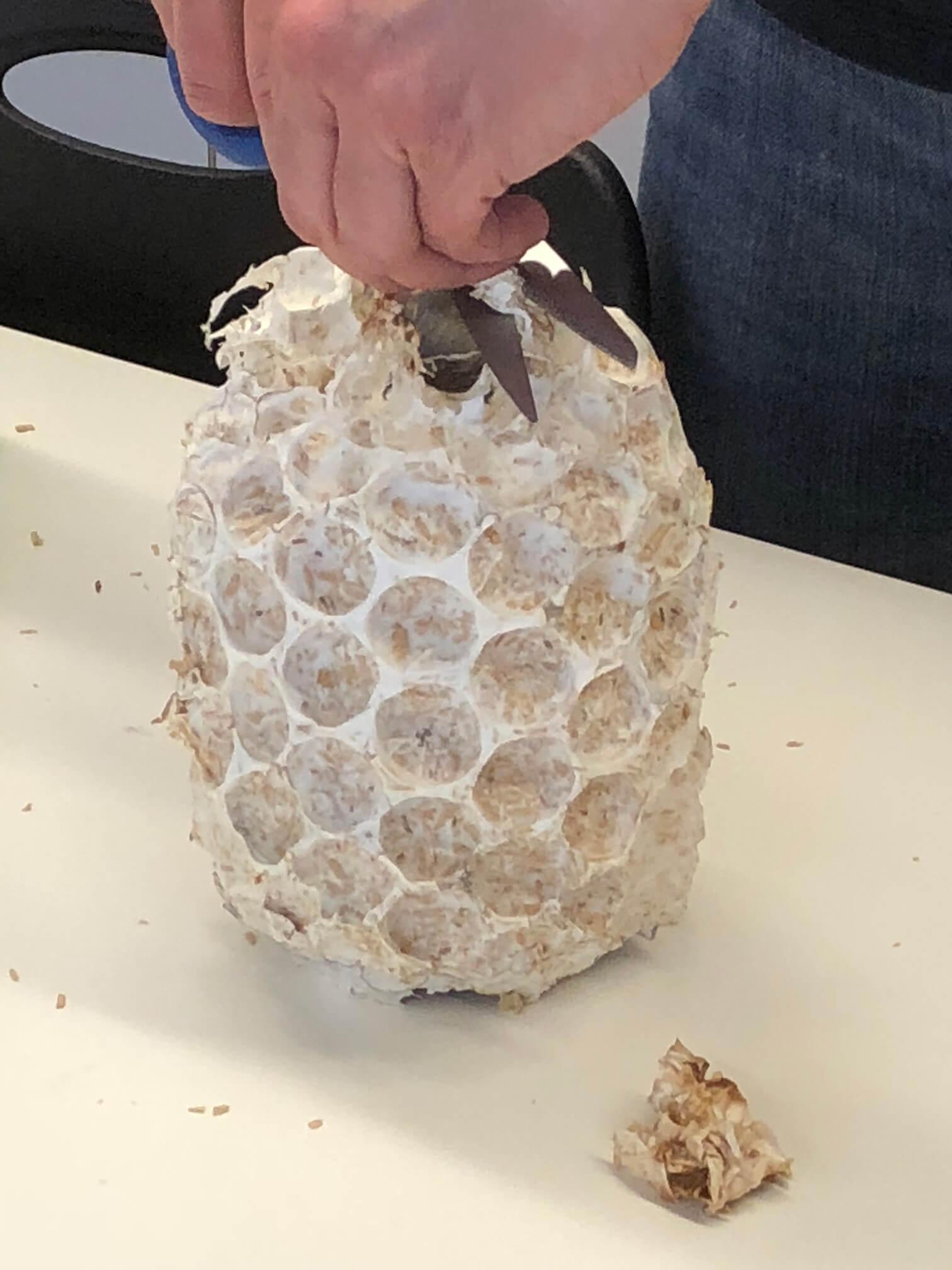 Mycelium lampshades being unmolded