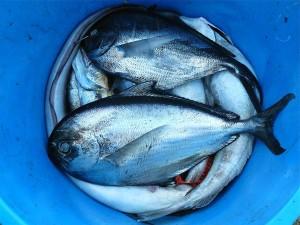 fish-422543_1280