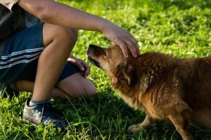 pets as companion