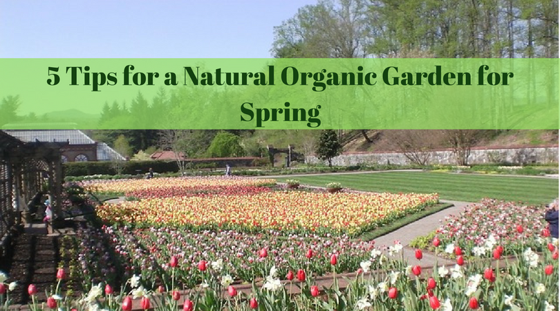 5 Tips for a Natural Organic Garden for Spring