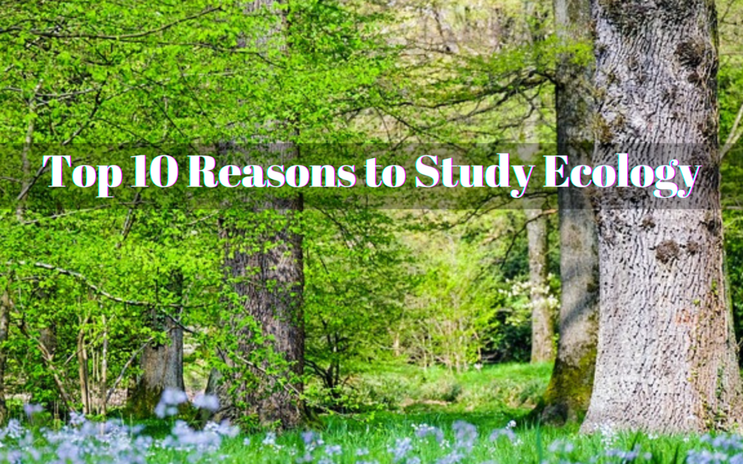 Top 10 Reasons to Study Ecology