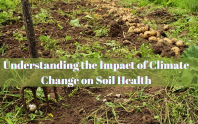 Understanding the Impact of Climate Change on Soil Health